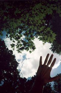 Hand and trees